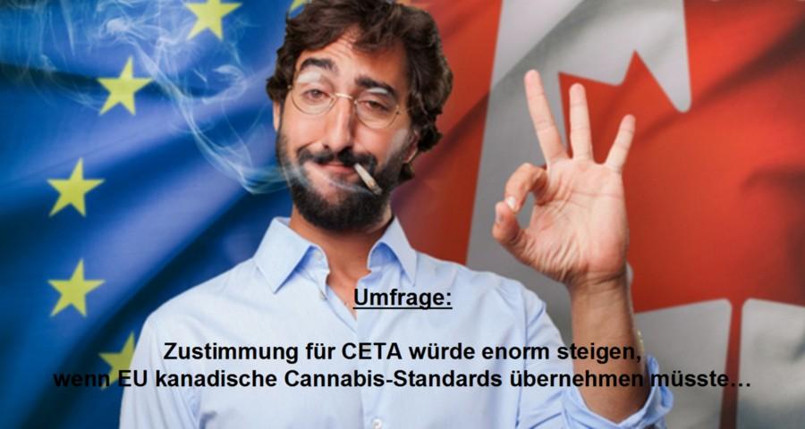 cannabis-01112016-01